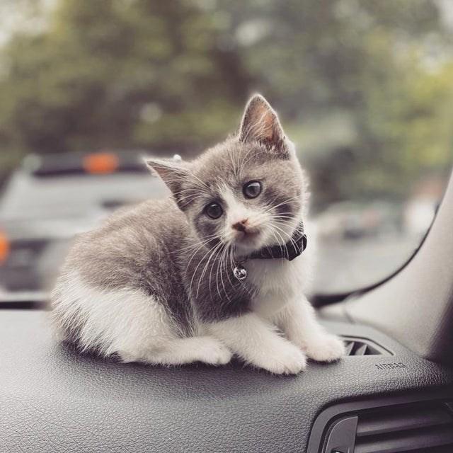 Cat - AIRBA