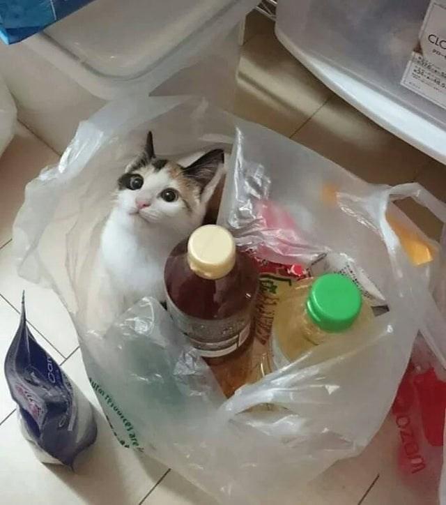 Cat - CLC ozem ufen resuurces are
