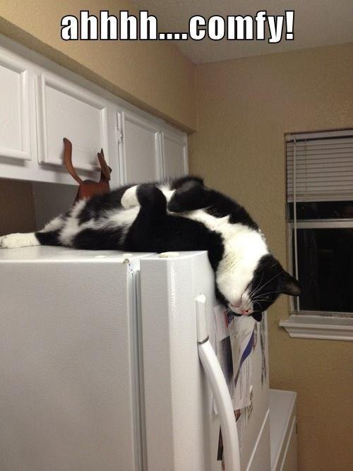 Cat - ahhhh.comfy!
