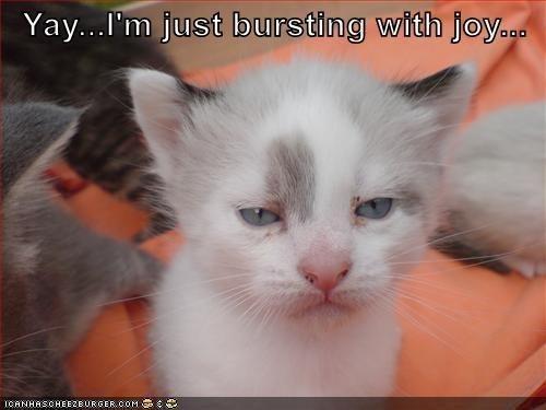 Cat - Yay...I'm just bursting with joy.co ICANHASCHEEZEURGER.COM