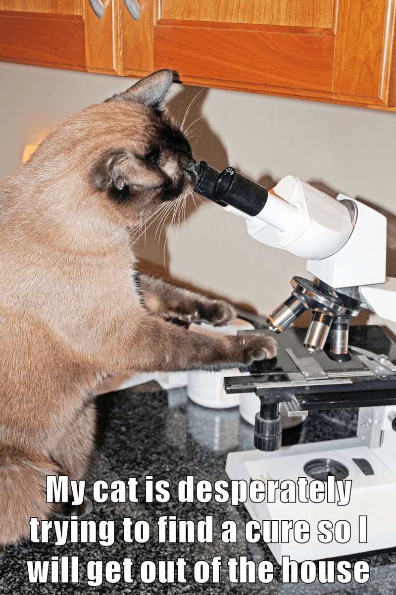 Cat - My cat is desperately trying to find a cure so l will get out of the house