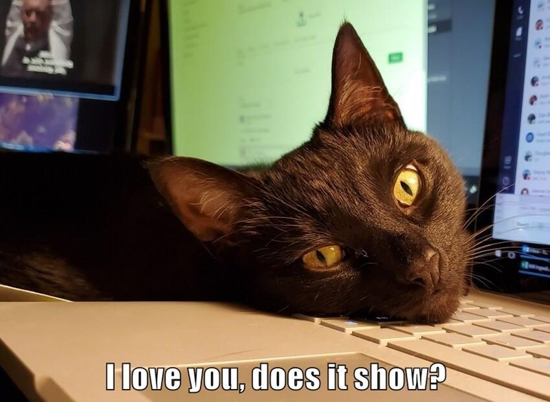 Cat - I love you, does it show?