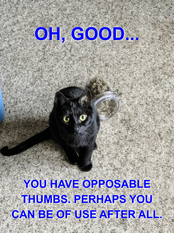 Cat - OH, GOOD.. YOU HAVE OPPOSABLE THUMBS. PERHAPS YOU CAN BE OF USE AFTER ALL.