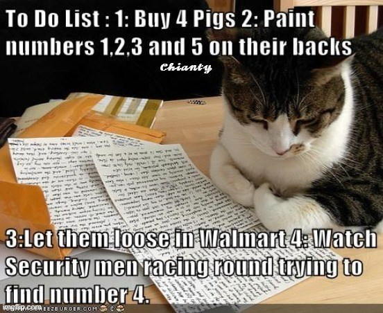 Cat - To Do List: 1: Buy 4 Pigs 2: Paint numbers 1,2,3 and 5 on their backs Chianty 3:Let them loose in Walmart 4: Watch Security men racing round trying to number 4. ingflip.comEEZEURGER.COM