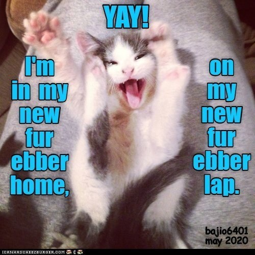 Photo caption - YAY! I'm in my new fur ebber home, on my new fur ebber lap. bajio6401 may 2020 ICANHASCHEEZBURGER.COM E