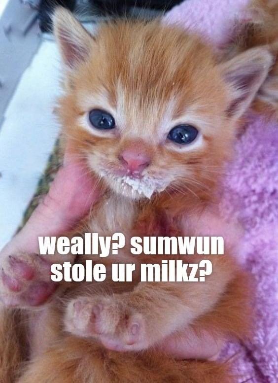 Cat - weally? sumwun stole ur milkz?