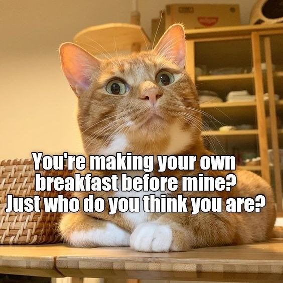 Cat - You're making your own breakfast before mine? Just who do you think you are?