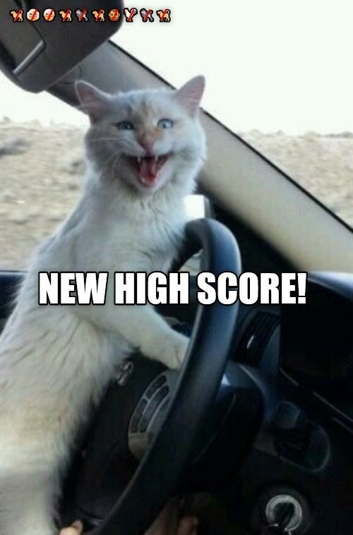 Cat - NEW HIGH SCORE!
