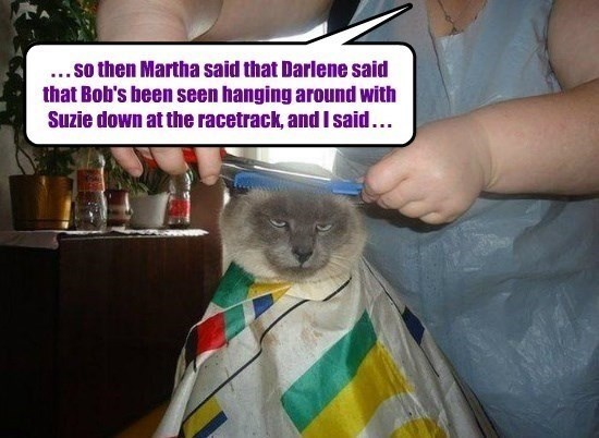 Cat - .. so then Martha said that Darlene said that Bob's been seen hanging around with Suzie down at the racetrack, andIsaid...