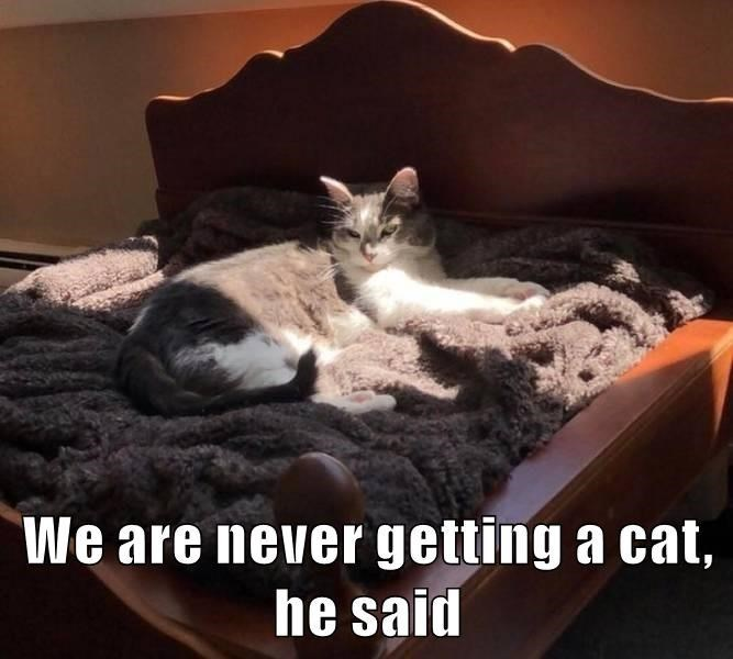 Cat - We are never getting a cat, he said
