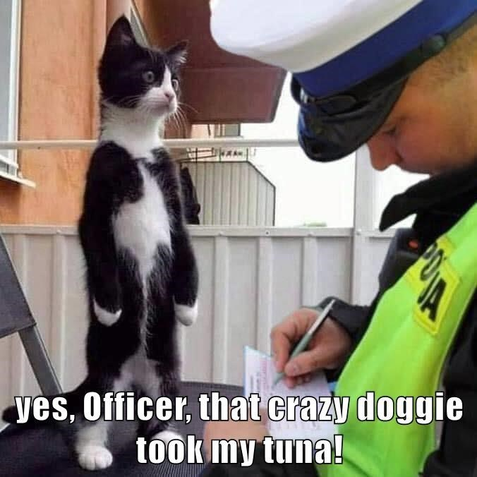 Cat - ves, Officer, that crazy doggie took my tuna!
