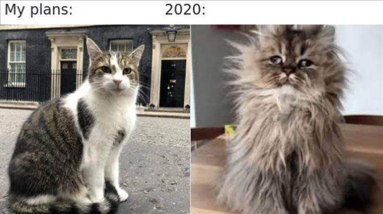 my plans 2020 cute cat vs very frazzled looking cat with messy fur