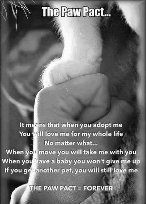 Paw Pact It means that when you adopt me love me for my whole life No matter what... move you will take me with you have a baby you won't give me another pet, you will me HE PAW PACT = FOREVER