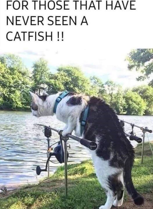 FOR THOSE THAT HAVE NEVER SEEN A CATFISH !! cat holding a fishing rod looking into a lake