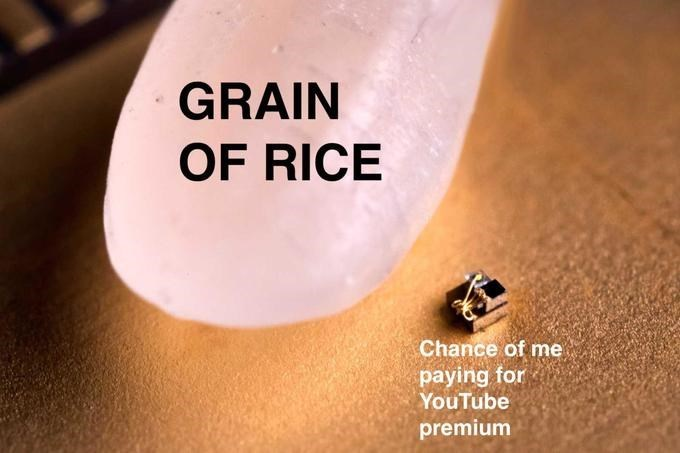 Skin - GRAIN OF RICE Chance of me paying for YouTube premium