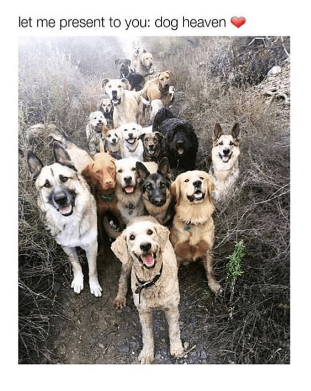 Dog - let me present to you: dog heaven