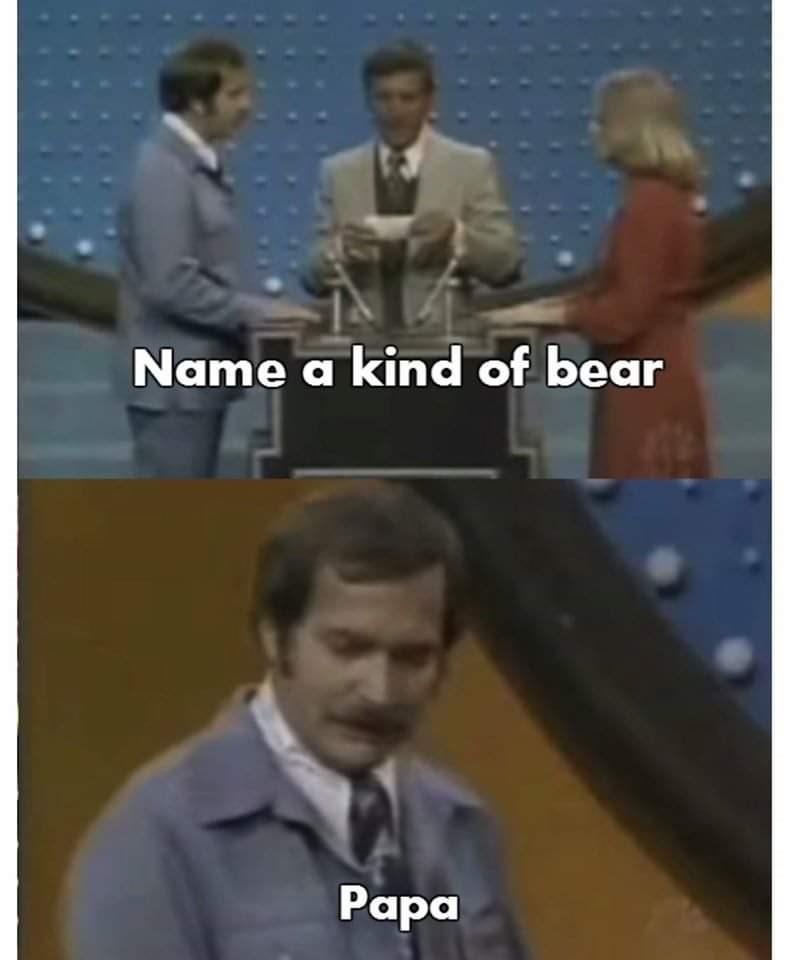 Photo caption - Name a kind of bear Раpа
