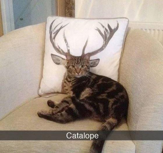 Antler - Catalope