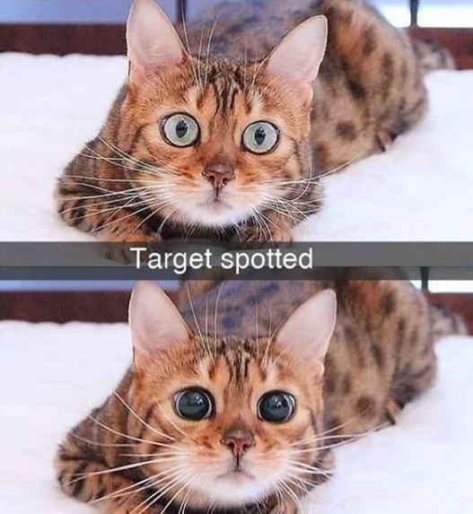 Cat - Target spotted