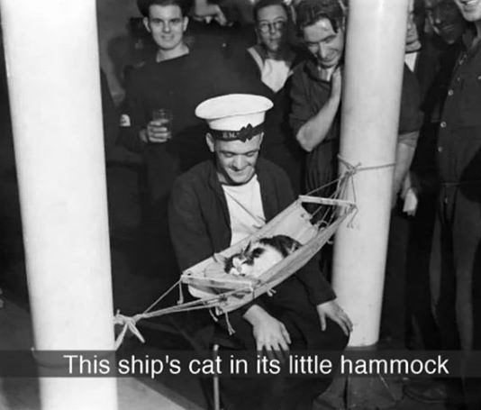 Photograph - This ship's cat in its little hammock