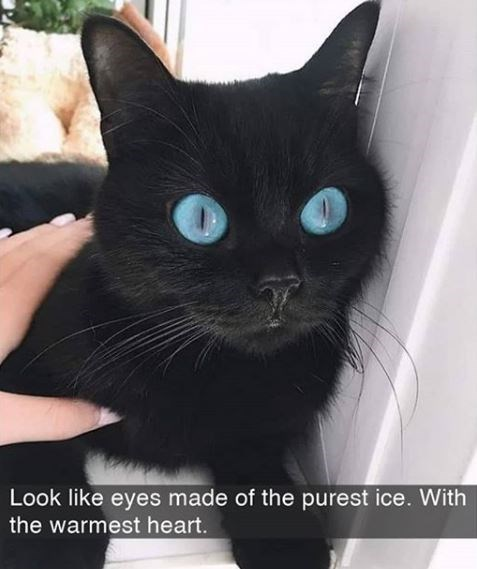 Cat - Look like eyes made of the purest ice. With the warmest heart.