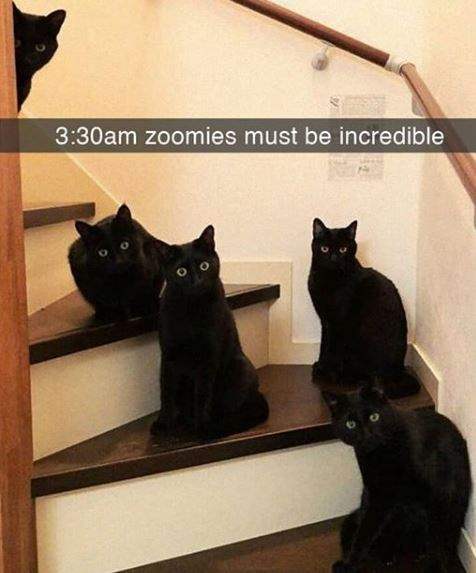 Cat - 3:30am zoomies must be incredible