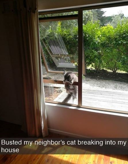 Window - Busted my neighbor's cat breaking into my house