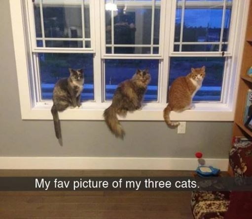 Cat - My fav picture of my three cats.