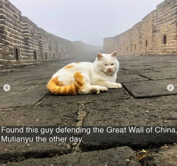 Cat - Found this guy defending the Great Wall of China, Mutianyu the other day.