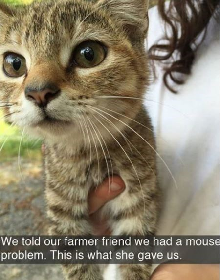 Cat - We told our farmer friend we had a mouse problem. This is what she gave us.