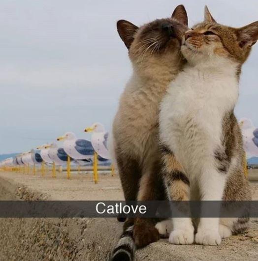 Cat - Catlove