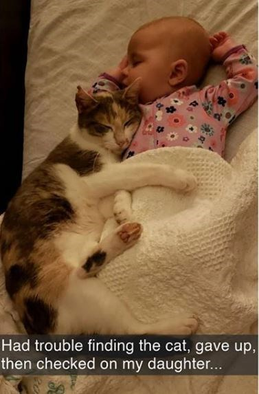 Cat - Had trouble finding the cat, gave up, then checked on my daughter...