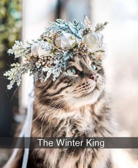 Felidae - The Winter King