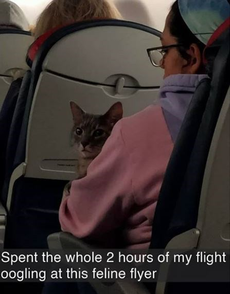 Cat - Spent the whole 2 hours of my flight oogling at this feline flyer