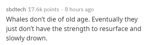 Text - sbdtech 17.6k points · 8 hours ago Whales don't die of old age. Eventually they just don't have the strength to resurface and slowly drown.