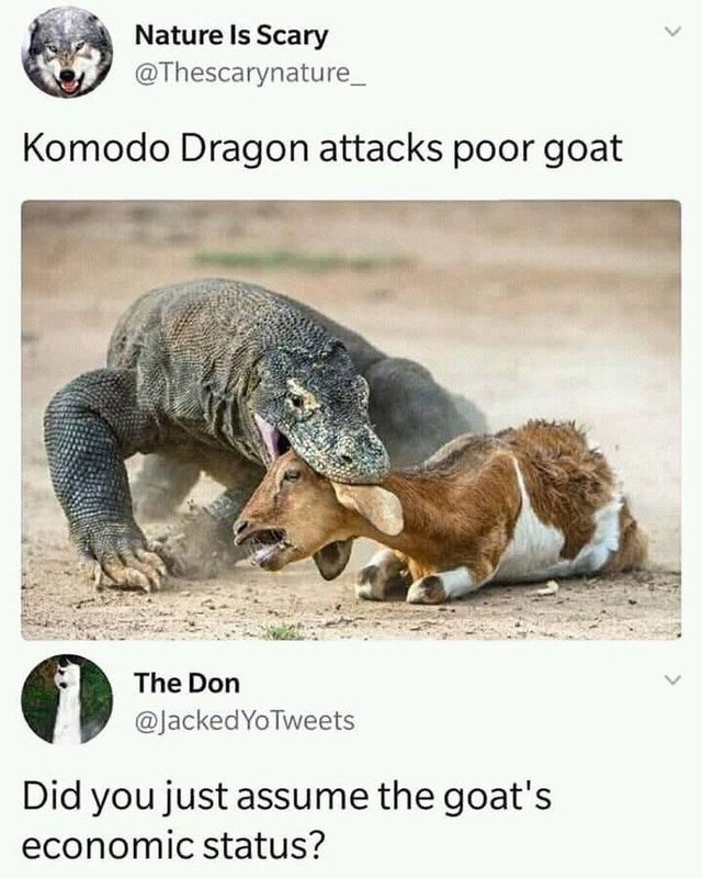 Terrestrial animal - Nature Is Scary @Thescarynature_ Komodo Dragon attacks poor goat The Don @JackedYoTweets Did you just assume the goat's economic status? >