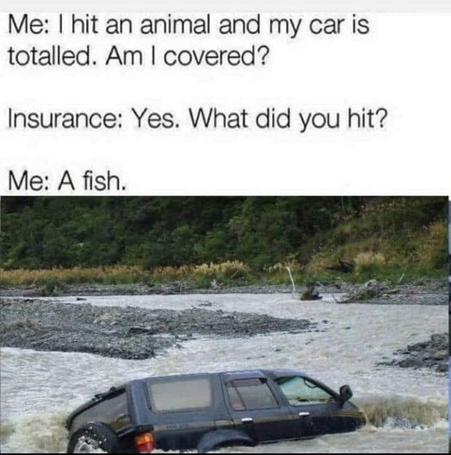 Vehicle - Me: I hit an animal and my car is totalled. Am I covered? Insurance: Yes. What did you hit? Ме: A fish.