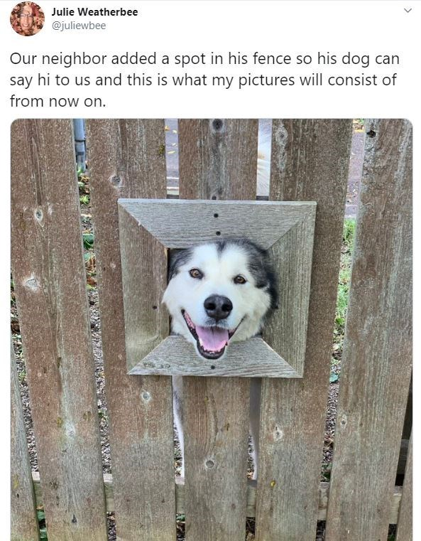 Dog - Julie Weatherbee @juliewbee Our neighbor added a spot in his fence so his dog can say hi to us and this is what my pictures will consist of from now on.