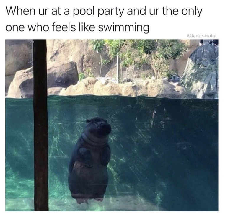 Adaptation - When ur at a pool party and ur the only one who feels like swimming @tank.sinatra