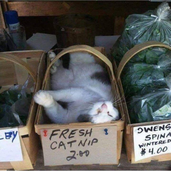 cute cat sleeping in a box labeled fresh catnip