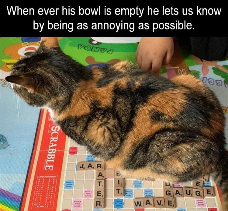 cat sitting on top of a scrabble board game When ever his bowl is empty he lets us know by being as annoying as possible.