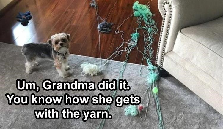 Um, Grandma did it. You know how she gets with the yarn.