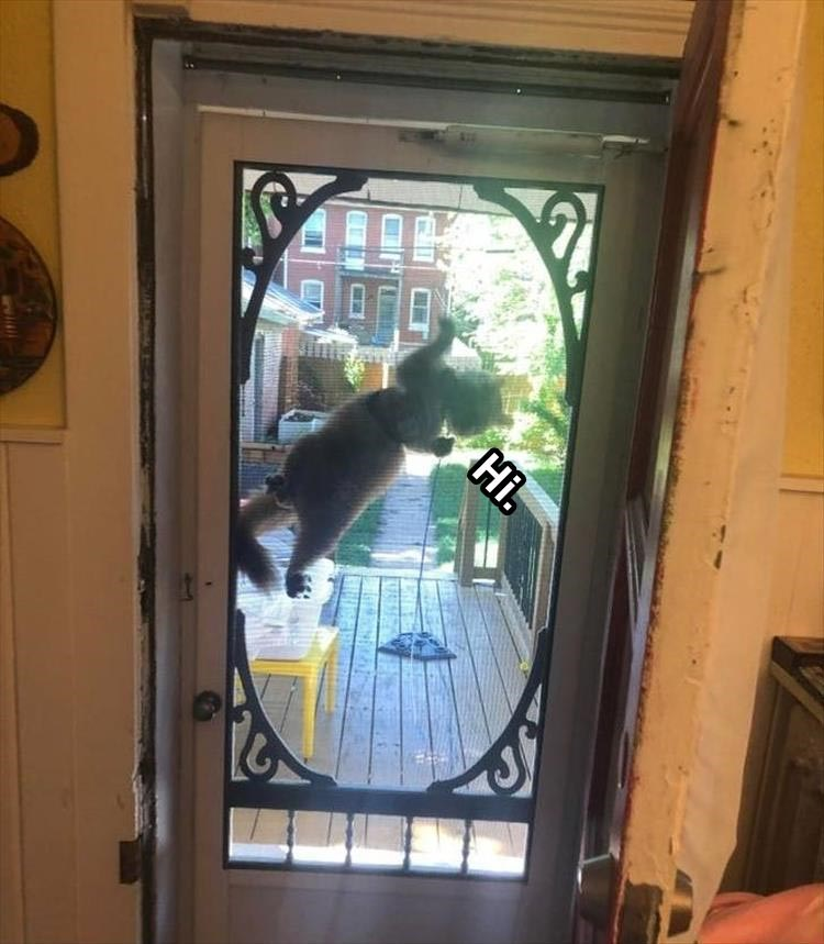 cat climbing the net door from outside saying hi
