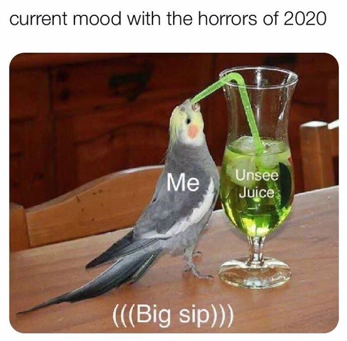 Bird - current mood with the horrors of 2020 Me Unsee Juice (((Big sip)))