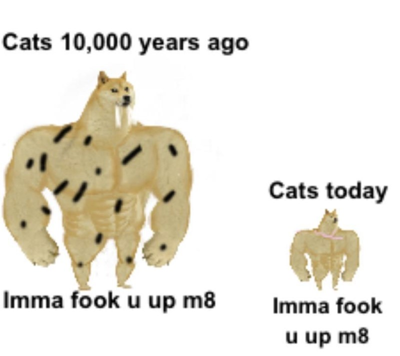 Text - Cats 10,000 years ago Cats today Imma fook u up m8 Imma fook u up m8