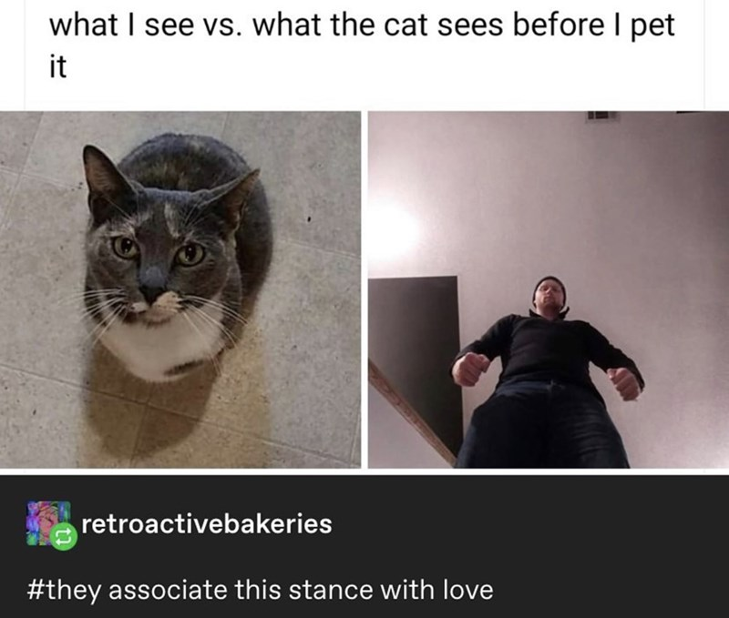 Cat - what I see vs. what the cat sees before I pet it retroactivebakeries #they associate this stance with love