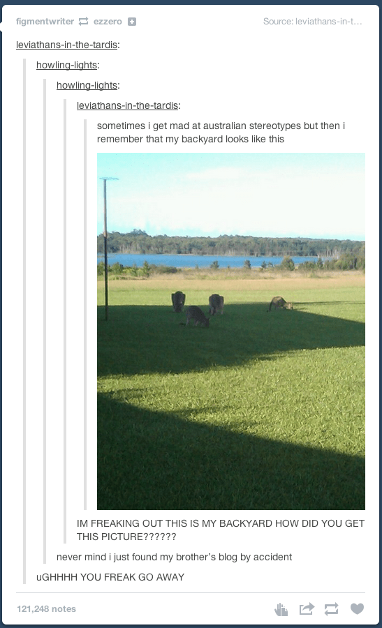 Grassland - figmentwriter ezzero a Source: leviathans-in-t... leviathans-in-the-tardis: howling-lights: howling-lights: leviathans-in-the-tardis: sometimes i get mad at australian stereotypes but then i remember that my backyard looks like this IM FREAKING OUT THIS IS MY BACKYARD HOW DID YOU GET THIS PICTURE?????? never mind i just found my brother's blog by accident UGHHHH YOU FREAK GO AWAY 121,248 notes