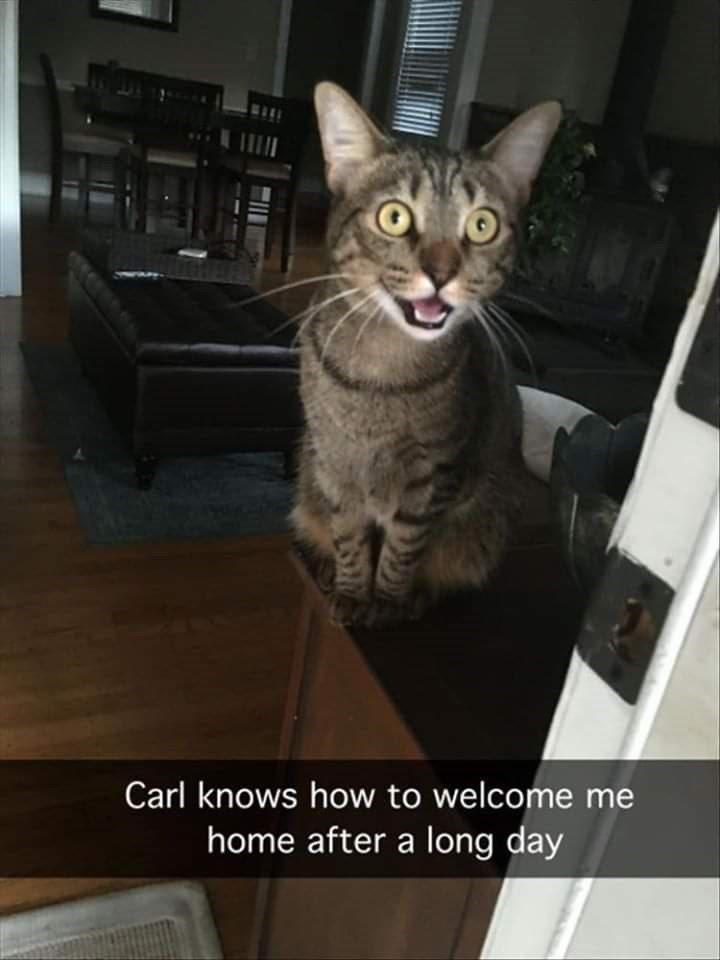 Cat - Carl knows how to welcome me home after a long day