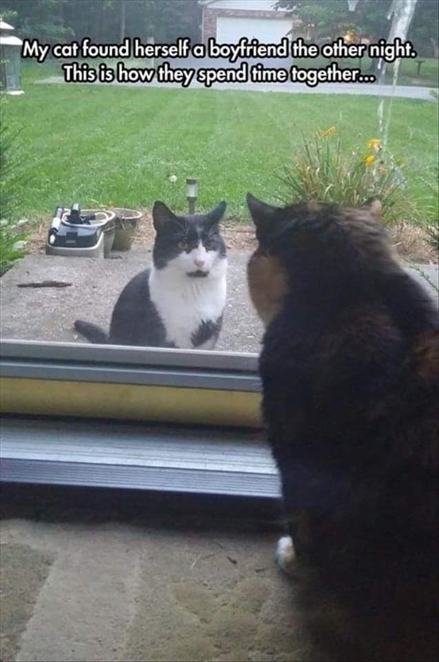 """Cat - My cat found herself a boyfifiend the other night. This is how they spend time together."""""""