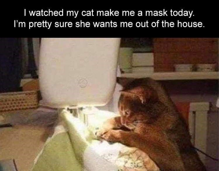 Cat - I watched my cat make me a mask today. I'm pretty sure she wants me out of the house.